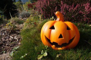 Rozpocznij przygotowania na Halloween! Poznaj sprawdzone pomysły na lampiony z dyni