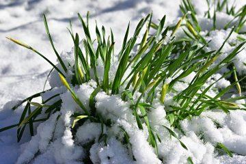 Przygotuj swój ogród na zimę w 10 krokach