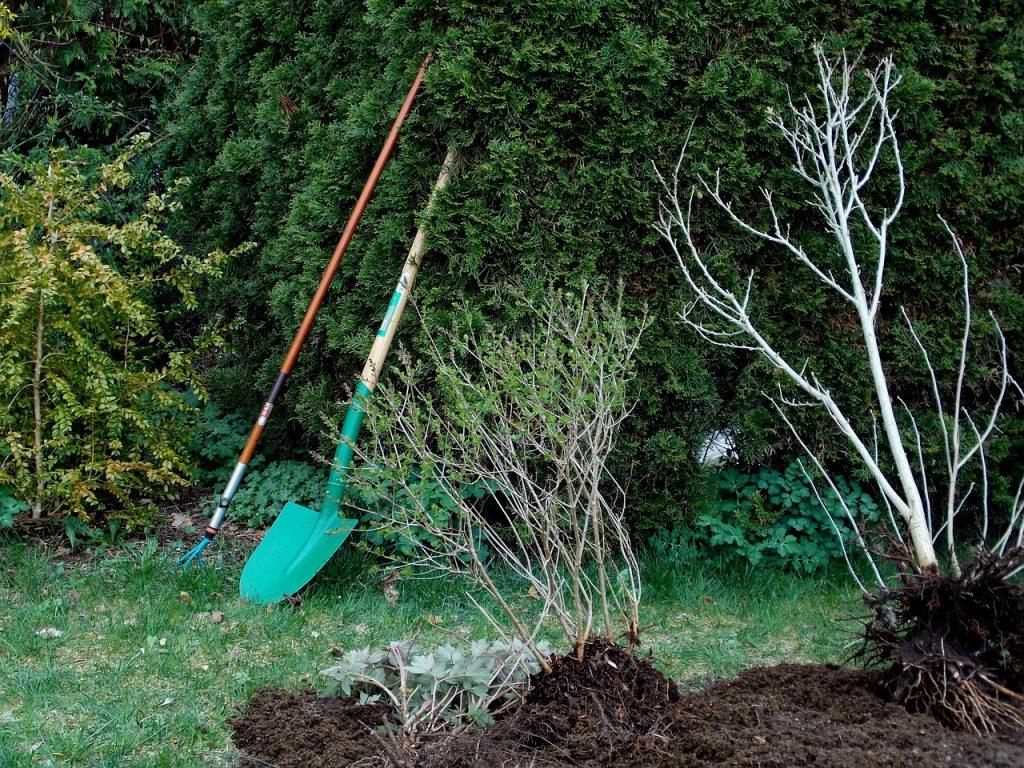 przekopywanie ogrodu, łopata