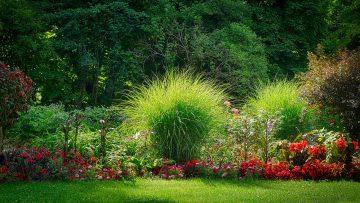 Trawy dekoracyjne do ogrodu - jakie wybrać?