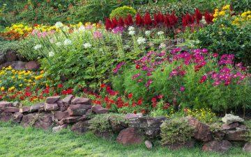 Byliny ogrodowe wieloletnie kwitnące - gatunki warte polecenia