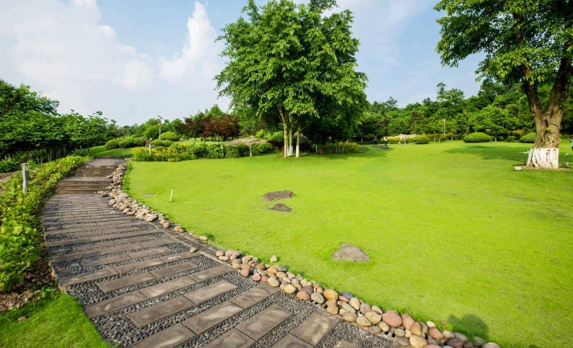 trawnik ogród