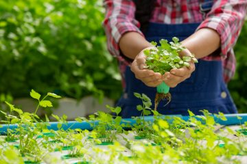 Ogródek ziołowy krok po kroku