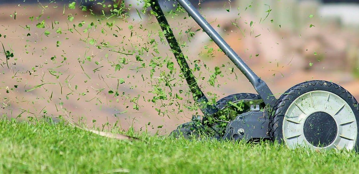 Jak często kosić trawę i na jaka wysokość?