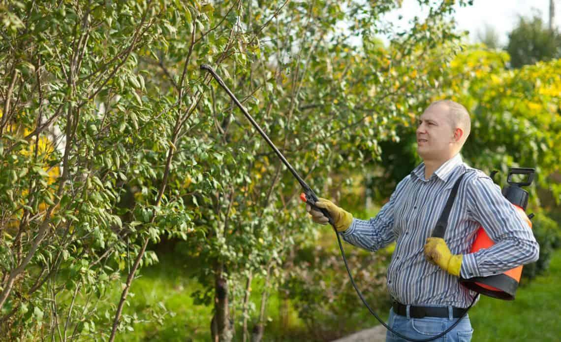 ogrodnik opryskujący drzewa