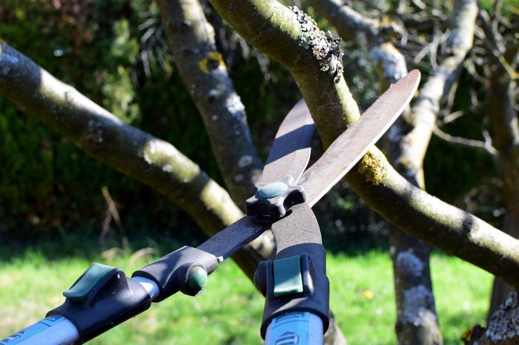 ogrodnik przycinający drzewa