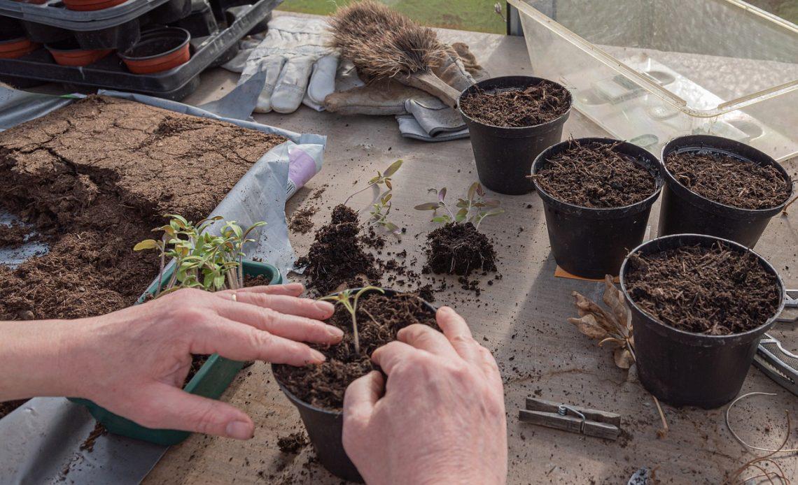 ogrodnik sadzi warzywa