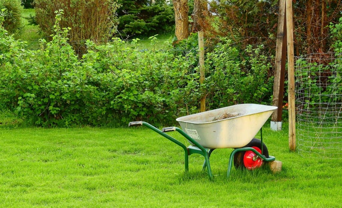 zielona trawa w ogrodzie