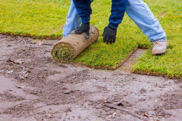 Trawnik z rolki – ile to kosztuje?