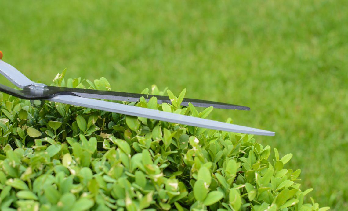 nożyce ogrodowe