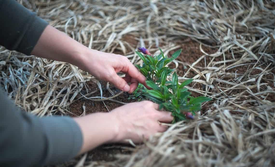 wywiew roślin