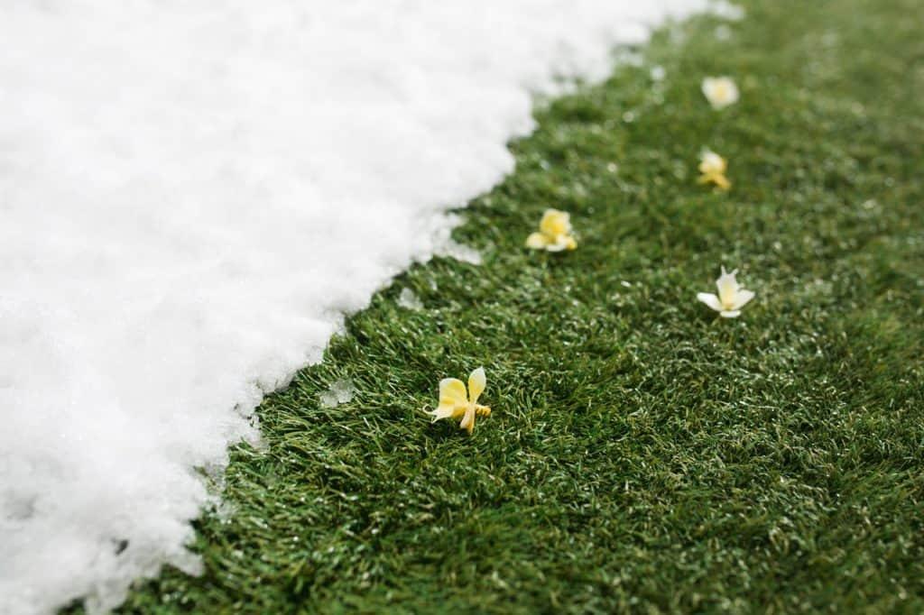 śnieg na trawie