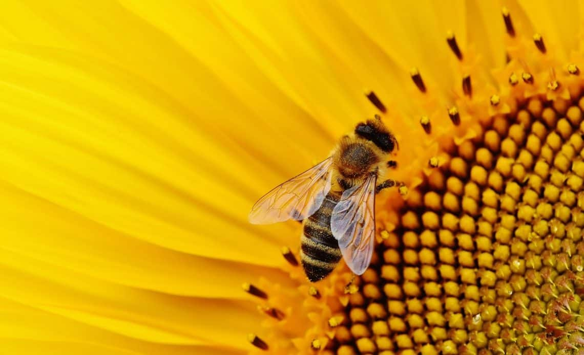 Podaruj kwiaty pszczołom!